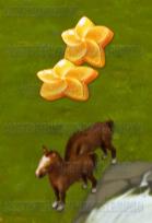 Golden Frontier Pony Stage 2