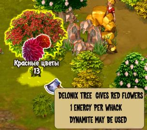 Delonix Tree