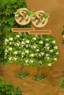 Ready Pistachio Tree
