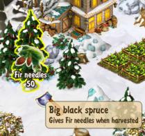 big-black-spruce