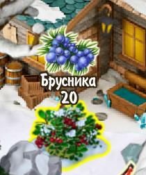 cowberry-bush