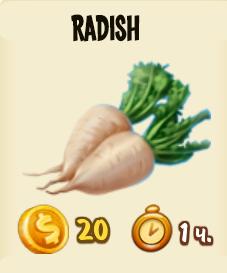 radish-1
