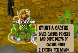 cactus-prickles-from-opuntia-cactus