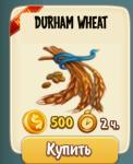 cost-of-durham-wheat