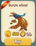 durum-wheat