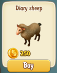 dairy-sheep