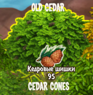 cedar-cones-from-old-cedar-2-energy-per-whack